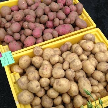Now harvesting potatoes